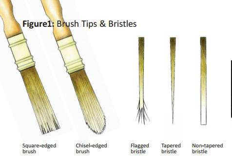 Brush Tips and Bristles