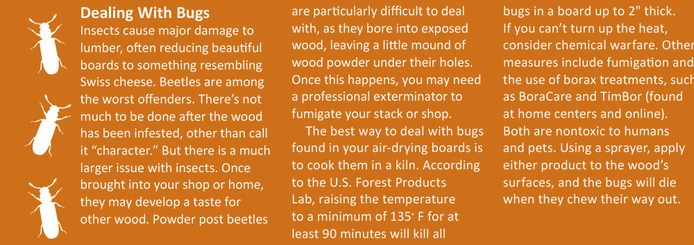 dealing with bugs in lumber