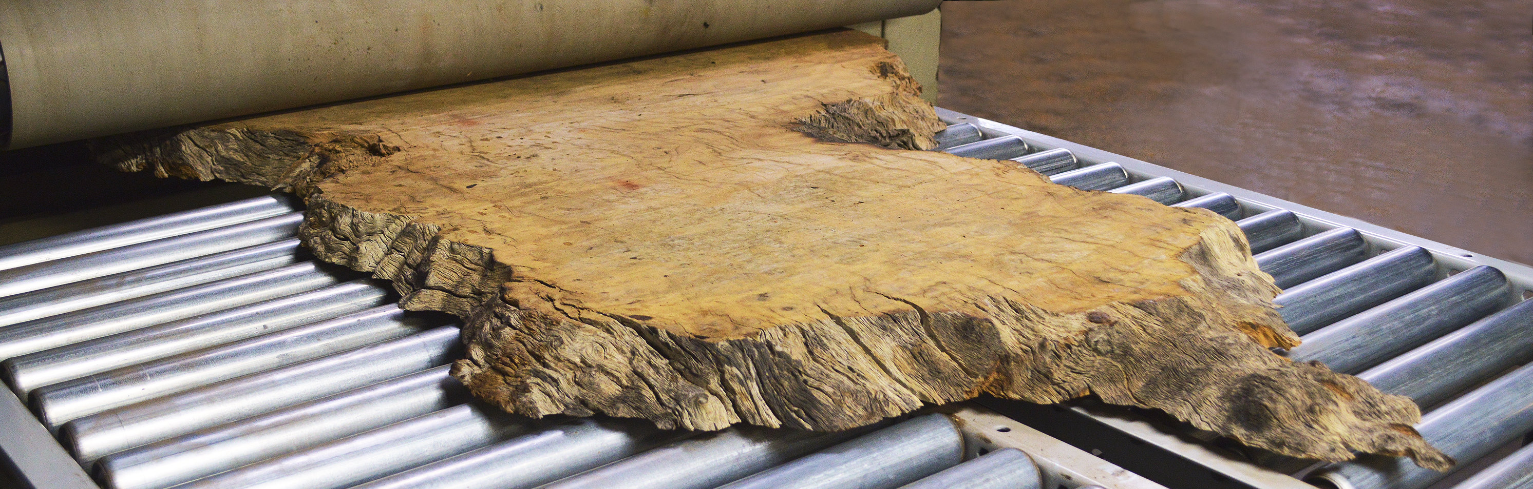 Pequiá tree slab