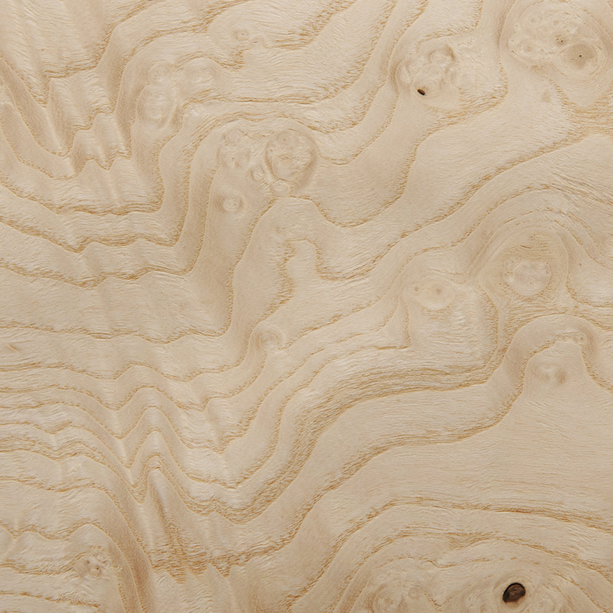 Sauers Ash Burl White 4 X8 Veneer Sheet 3m Psa Backed