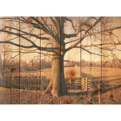 "View a Larger Image of Daydream Gizaun Cedar Wall Art, Big Oak, 33"" x 24"""