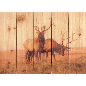 Bull Elk 33x24 Wood Art