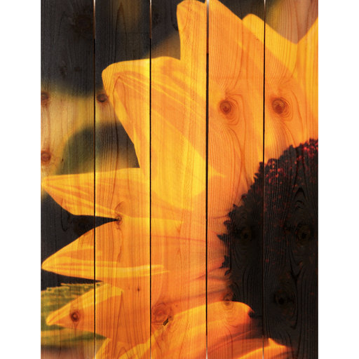 View a Larger Image of Sunflower 28x36 Wood Art