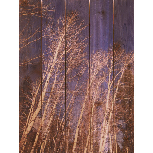 "View a Larger Image of Daydream Gizaun Cedar Wall Art, Winter Aspens, 28"" x 36"""