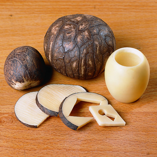 View a Larger Image of Tagua Nuts 5-piece