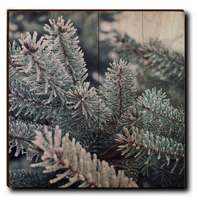 "Wall Art Frosty Pine 24"" x 24"""