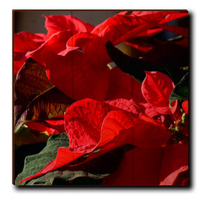 "Wall Art Pleasant Poinsettia 12"" x 12"""