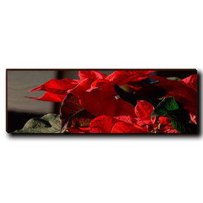 "Wall Art Pleasant Poinsettia 12"" x 4"""