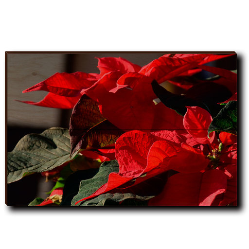 "View a Larger Image of Wall Art Pleasant Poinsettia 12"" x 8"""