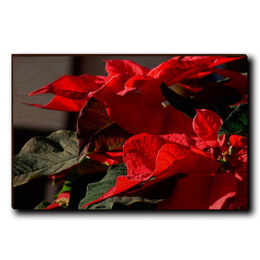 "View a Larger Image of Wall Art Pleasant Poinsettia 24"" x 16"""