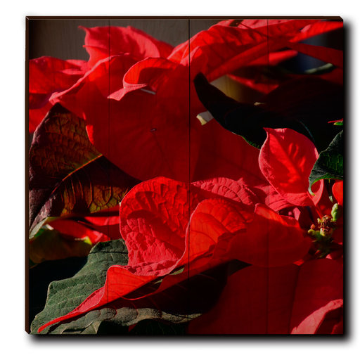 "View a Larger Image of Wall Art Pleasant Poinsettia 24"" x 24"""