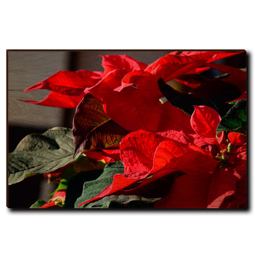 "View a Larger Image of Wall Art Pleasant Poinsettia 36"" x 24"""
