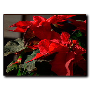 "Wall Art Pleasant Poinsettia 40"" x 30"""